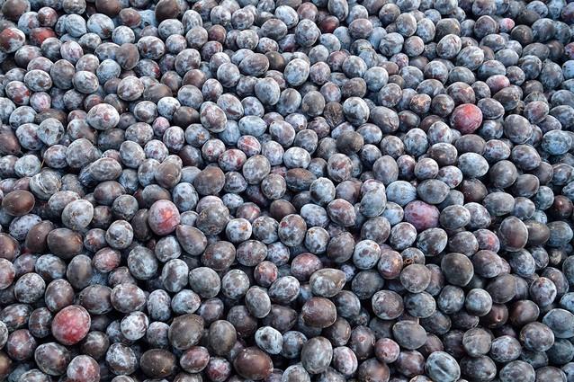 Do výroby sa dostáva len zrelé a čisté ovocie